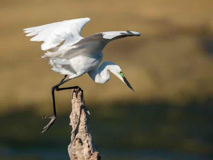 Eastern Cape Birds